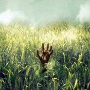 In the Tall Grass: La película