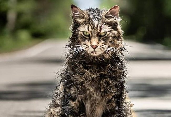 Pet Sematary: Trailer y póster